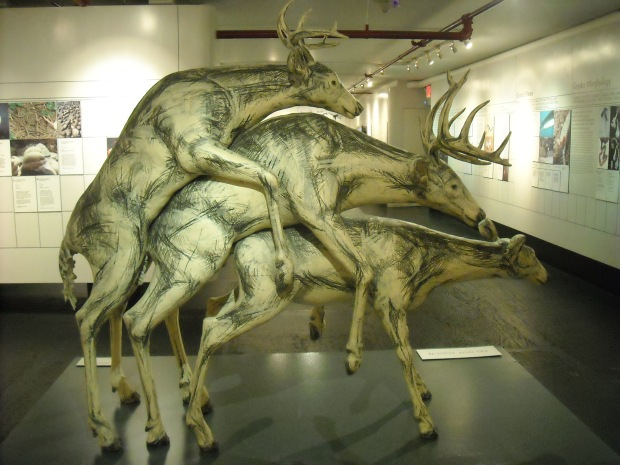 Deer threesome! Yes, this apparently also happens in nature. Deer love to get it on in groups!
